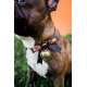 Halloween Hundehalsband